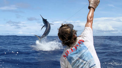 Port Douglas Marlin Challenge